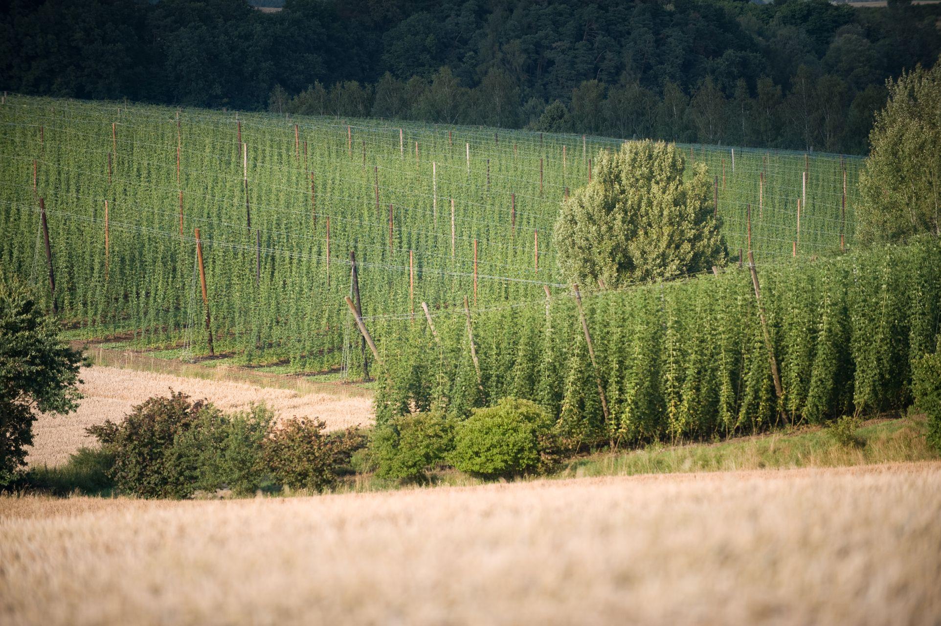 Hopfengarten und Felder bei Wildenberg