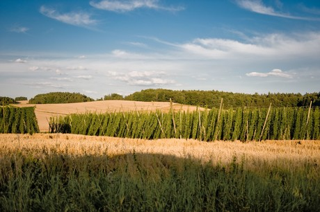 Blick über die Felder bei Walkertshofen