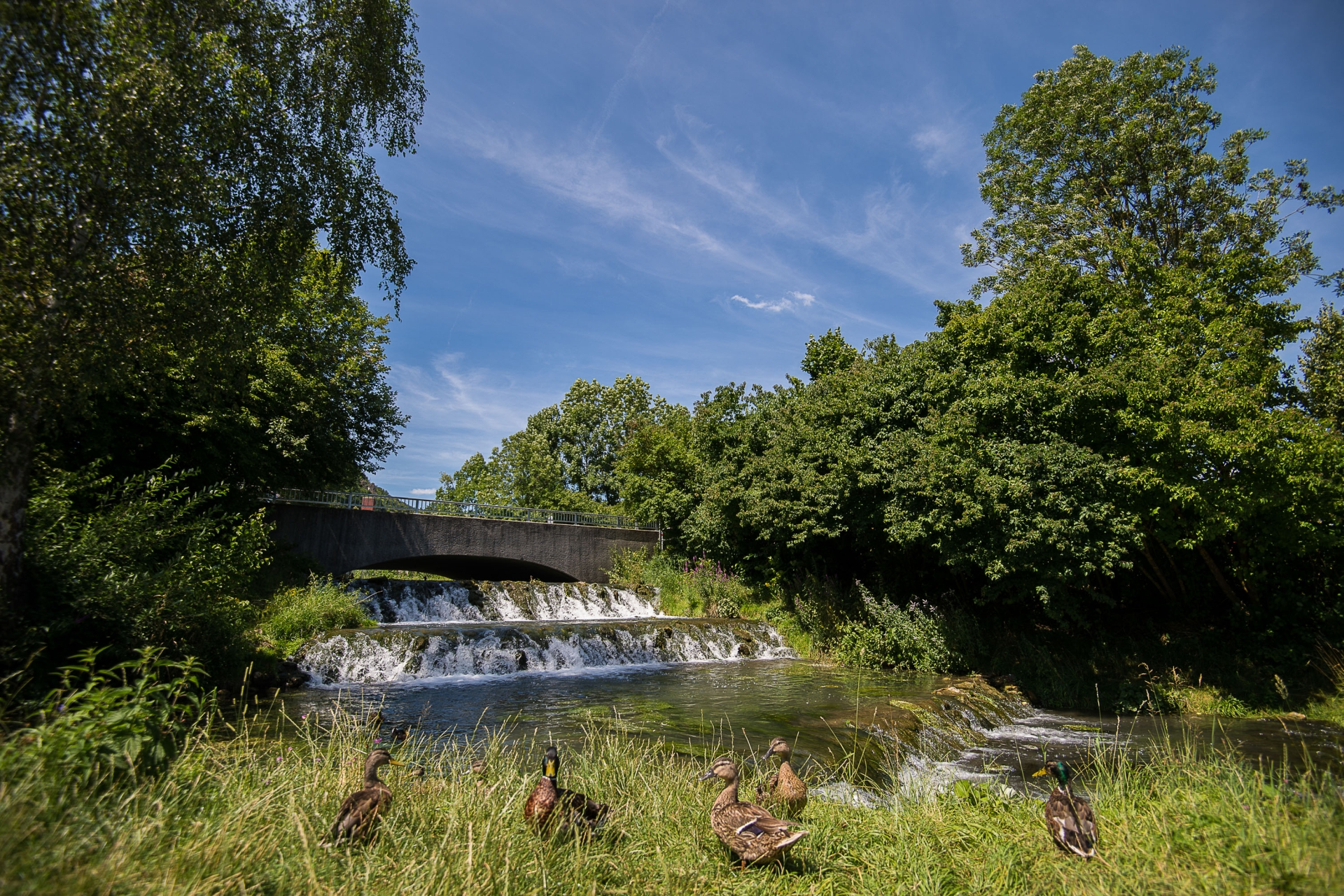 Am idyllischen Stadtweiher in Riedenburg im Altmühltal