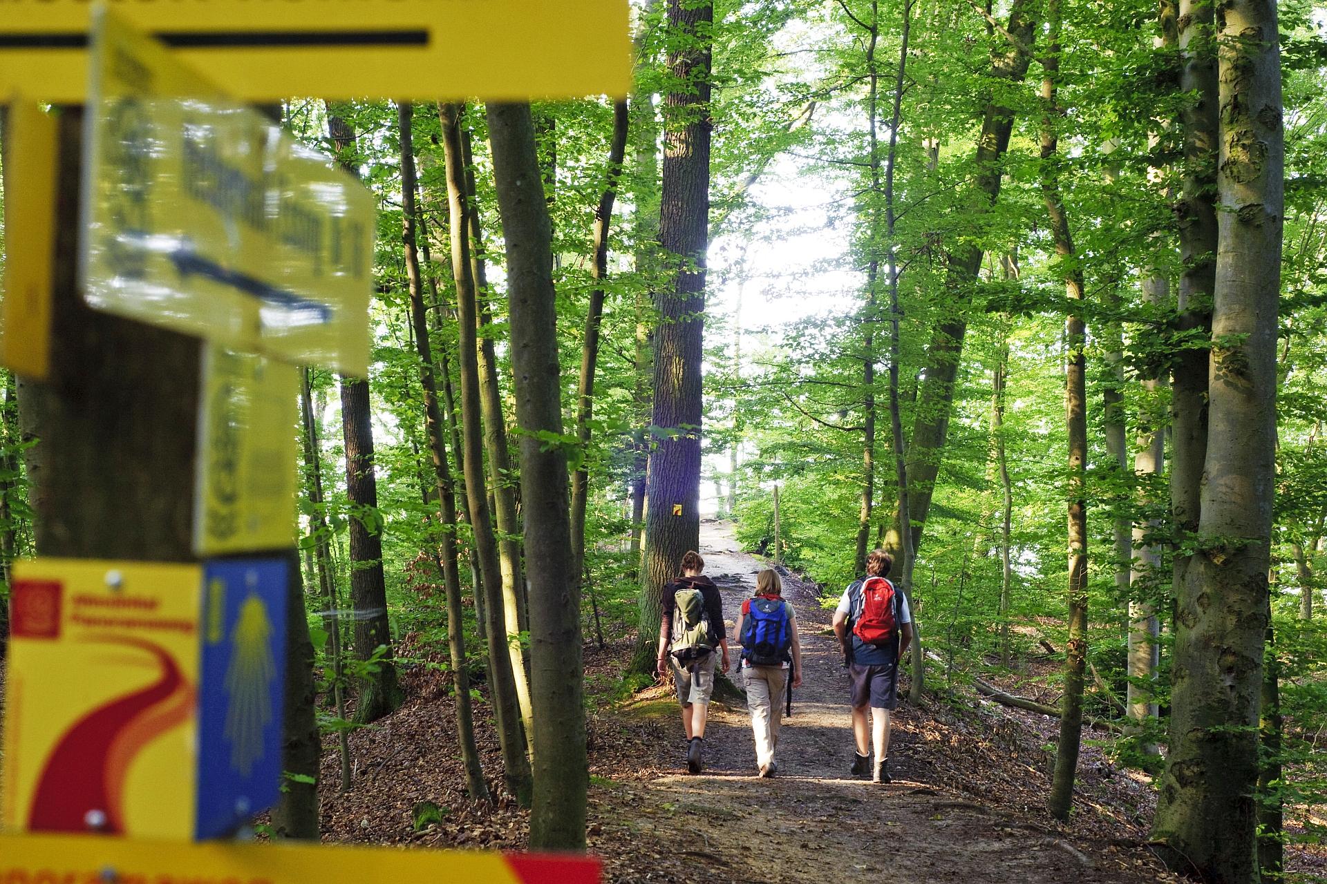 Wanderung auf einem Schlaufenweg des Altmühltal-Panoramaweges bei Kelheim
