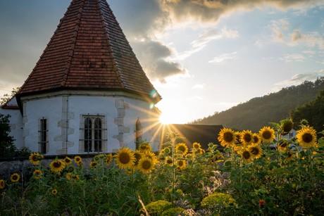 Sonne küsst Sonnenblumen bei einer Kirche in Kelheim