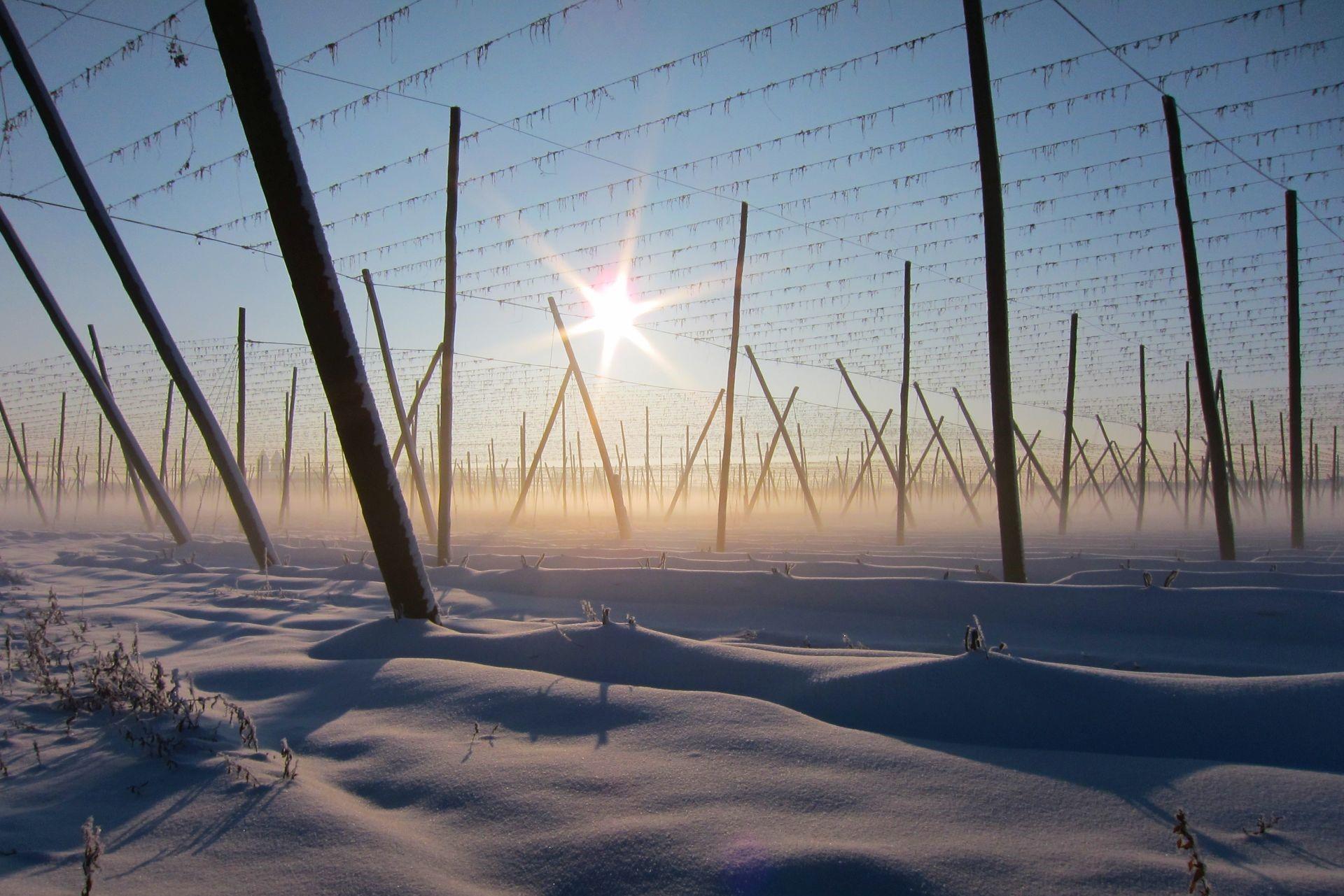 Winterliche Hopfengärten in Biburg
