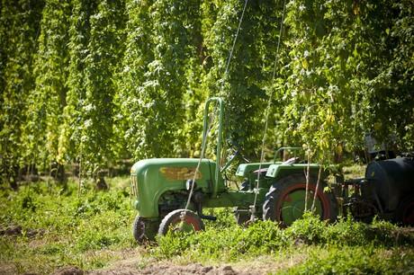 Traktor im Hopfengarten