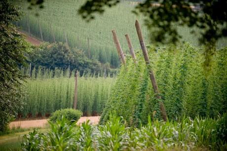 Hopfengarten und Felder